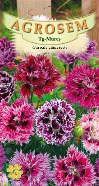 Seminte de Garoafe chinezesti mix - AS - Dianthus chinensis