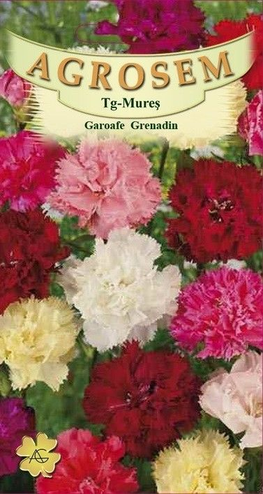Seminte de Garoafe Grenadin mix - AS - Dianthus caryophyllus