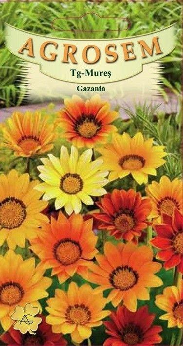 Seminte de Gazania mix - AS - Gazania splendens