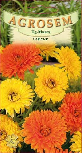 Seminte de Galbenele mix - AS - Calendula officinalis
