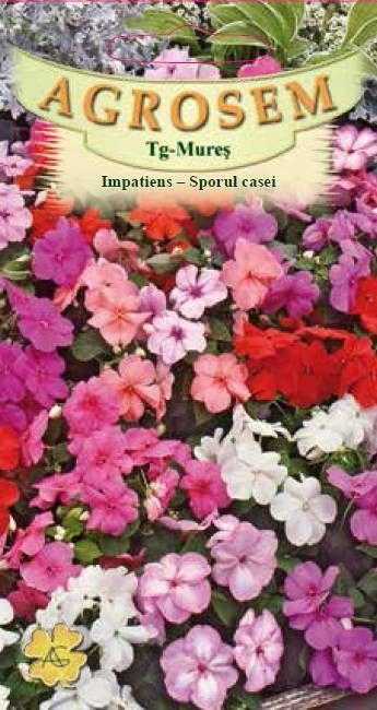 Seminte de Impatiens mix - AS - Impatiens walleriana
