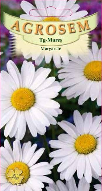 Seminte de Margarete - AS - Chrysanthemum leucanthemum
