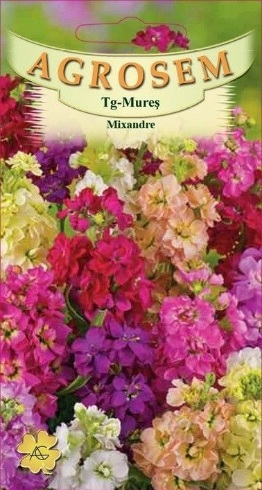 Seminte de Mixandre mix - AS - Matthiola incana