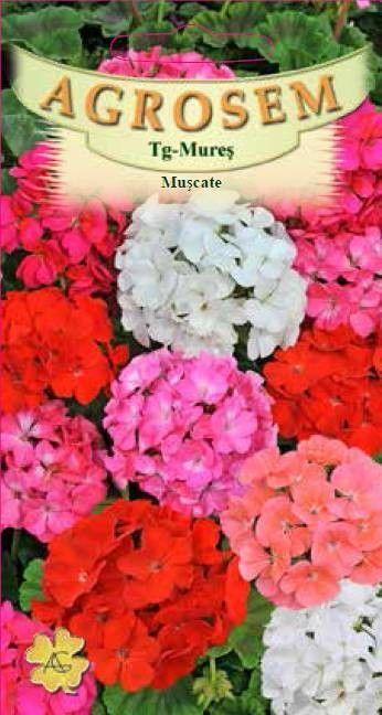 Seminte de Muscate mix - AS - Pelargonium zonale
