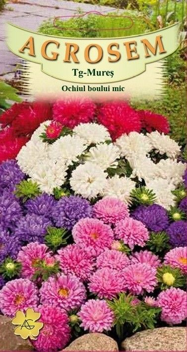Seminte de Ochiul boului mic mix - AS - Callistephus chinensis