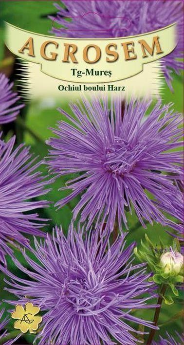 Seminte de Ochiul boului Harz albastru Lomengrin - AS - Callistephus chinensis