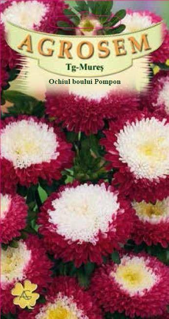 Seminte de Ochiul boului Pompon rosu cu alb - AS - Callistephus chinensis