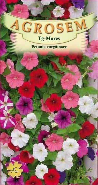 Seminte de Petunia curgatoare mix - AS - Petunia hybrida pendula