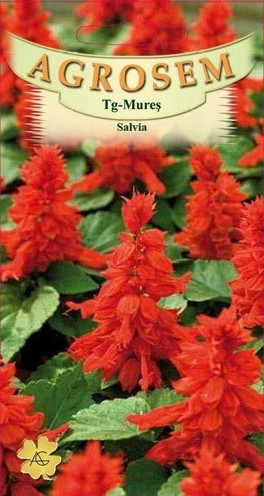 Seminte de Salvia - AS - Salvia splendens