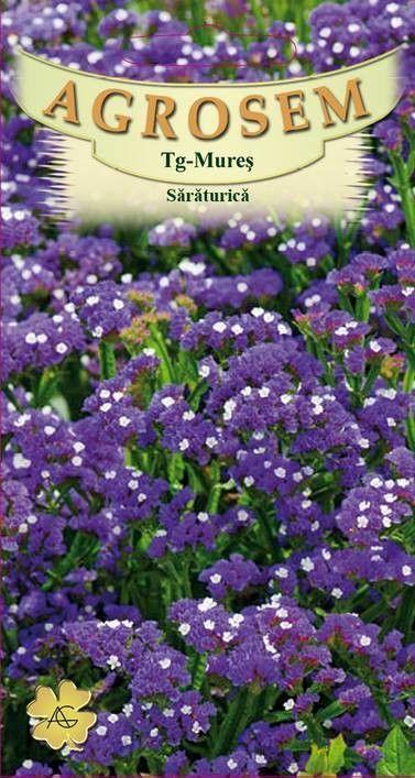 Seminte de Saraturica albastra - AS - Limonium sinuatum