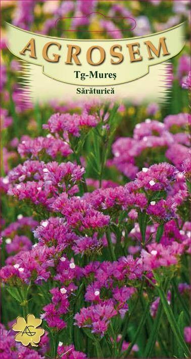 Seminte de Saraturica roz - AS - Limonium sinuatum