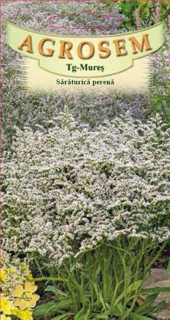 Seminte de Saraturica alba perena - AS - Limonium tataricum