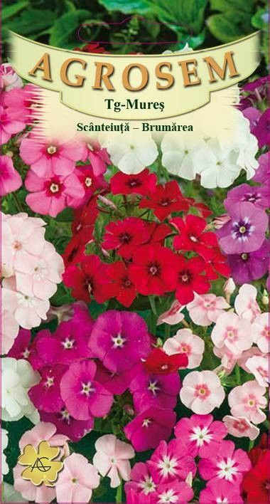 Seminte de Scanteiuta - brumarele mix - AS - Phlox drummondii