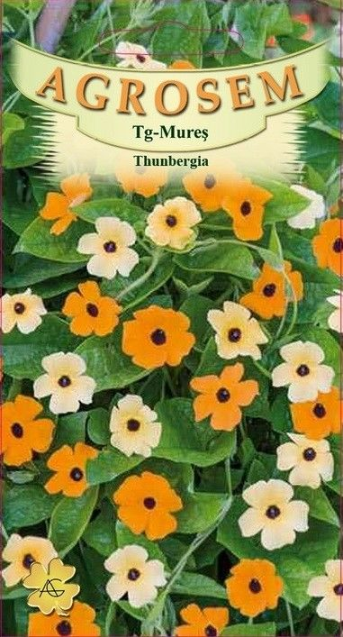 Seminte de Thunbergia - AS - Thunbergia alata