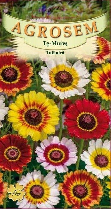 Seminte de Tufanica Frohe mix - AS - Chrysanthemum carinatum