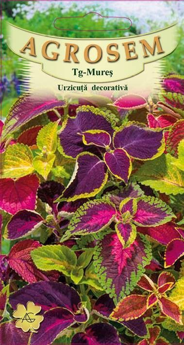 Seminte de Urzicuta decorativa mix - AS - Coleus blumei