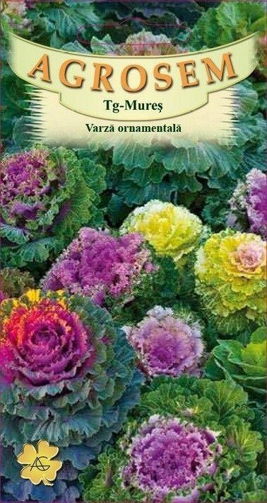 Seminte de Varza ornamentala mix - AS - Brassica oleracea