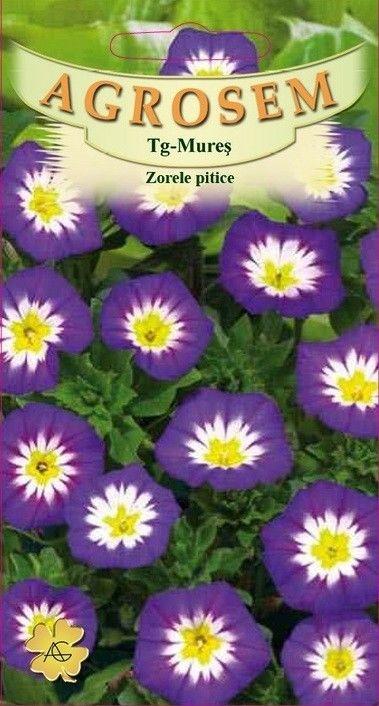 Seminte de Zorele pitice - AS - Convolvulus tricolor
