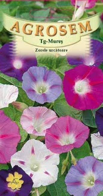 Seminte de Zorele urcatoare mix - AS - Ipomoea purpurea