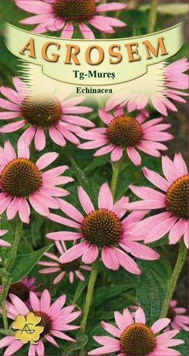 Seminte de Echinaceea - AS - Echinaceea purpurea