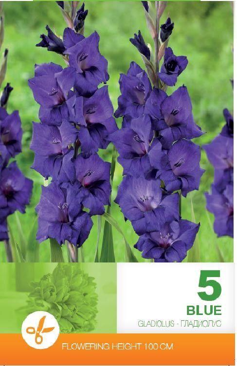 Gladiole bulbi Blue - 5 bulbi