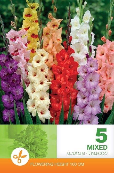 Gladiole bulbi mix - 5 bulbi