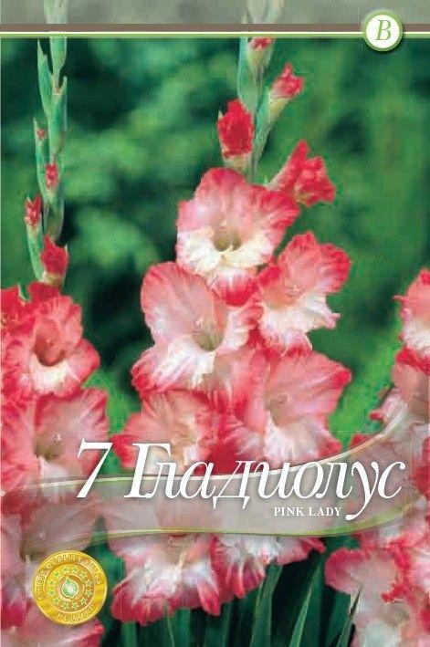 Gladiole bulbi Pink Lady - 7 bulbi