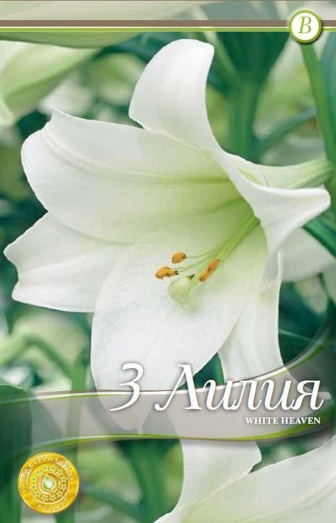 Lilium longiflorum White Heaven - 3 bulbi