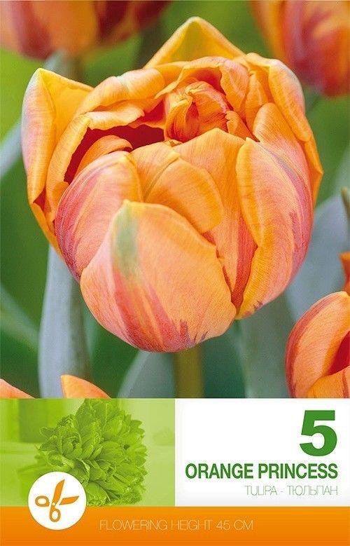 Bulbi de lalele Orange Princess - 5 bulbi