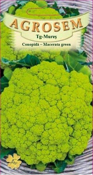 Seminte de Conopida verde Macerata Green - Brassica oleracea var. botrytis
