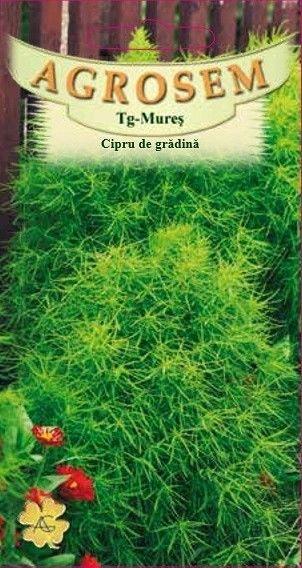 Seminte de Cipru de gradina - AS - Kochia scoparia