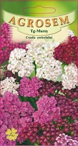 Seminte de Coada soricelului mix - AS - Achillea millefolium