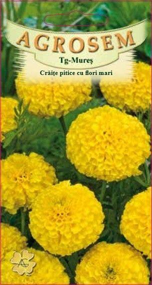 Seminte de Craite pitice cu flori mari galben - AS - Tagetes erecta nana
