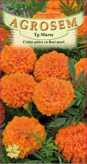 Seminte de Craite pitice cu flori mari portocaliu - Tagetes erecta nana