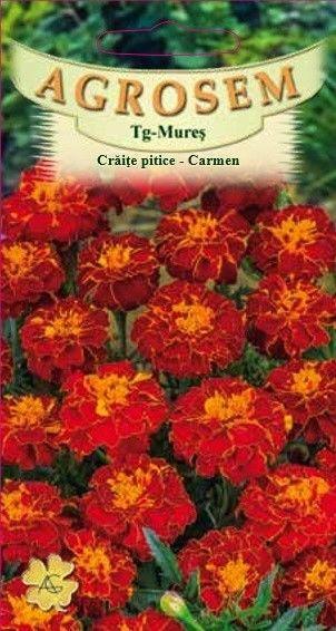 Seminte de Craite pitice Carmen - AS - Tagetes patula nana