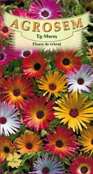 Seminte de Floare de cristal mix - AS - Mesembryanthemum criniflorum