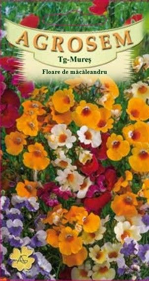 Seminte de Floare de macaleandru mix - AS - Nemesia strumosa