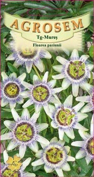 Seminte de Floarea pasiunii - AS - Passiflora caerulea