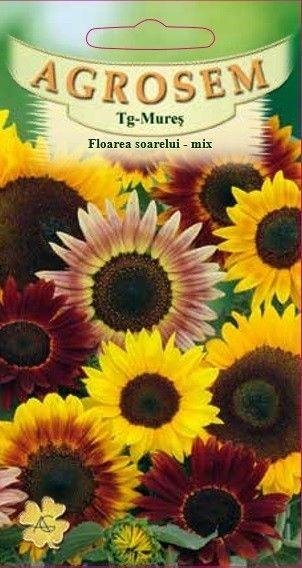 Seminte de Floarea soarelui mix - AS - Helianthus annuus