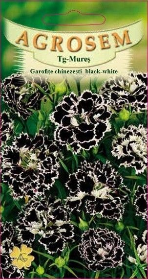 Seminte de Garofite chinezesti black-white - AS - Dianthus chinensis