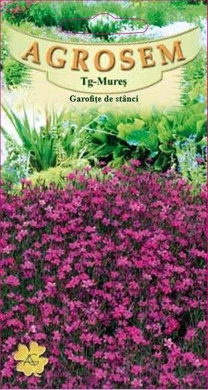Seminte de Garofite de stanci - AS - Dianthus deltoides