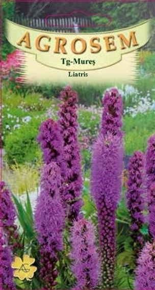 Seminte de Liatris - AS - Liatris spicata