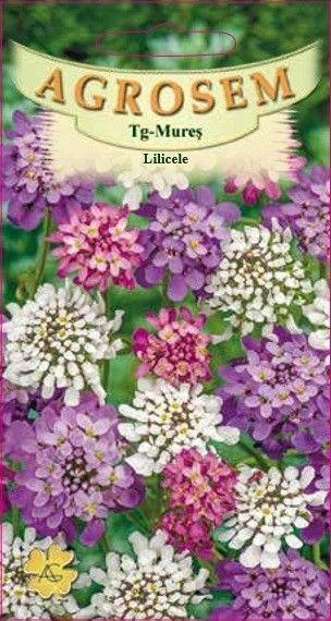 Seminte de Lilicele mix - AS - Iberis umbellata