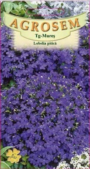 Seminte de Lobelia pitica - AS - Lobelia erinus