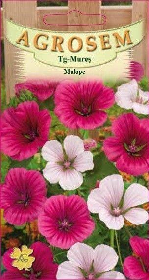 Seminte de Malope mix - AS - Malope trifida