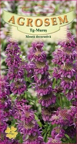 Seminte de Menta decorativa - AS - Monarda citriodora