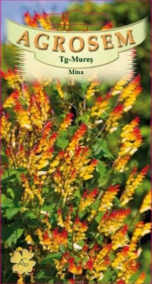 Seminte de Mina - AS - Mina lobata