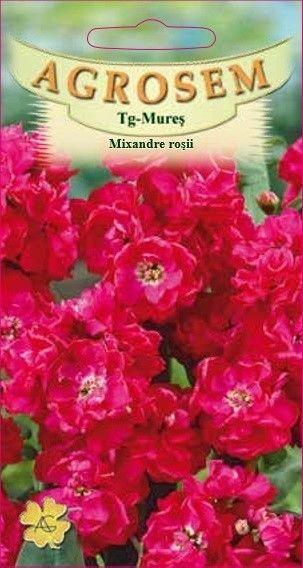 Seminte de Mixandre Red - AS - Matthiola incana
