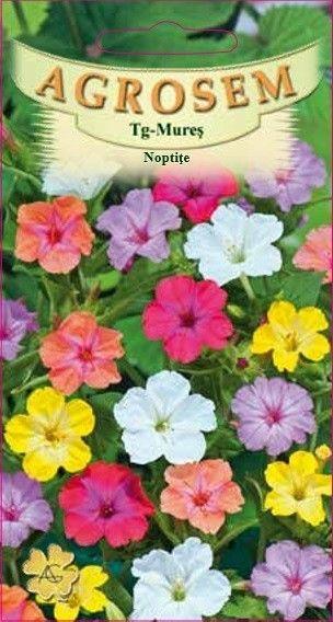 Seminte de Noptite mix - AS - Mirabilis jalapa