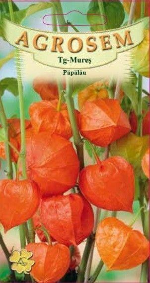 Seminte de Papalau - AS - Physalis alkekengi